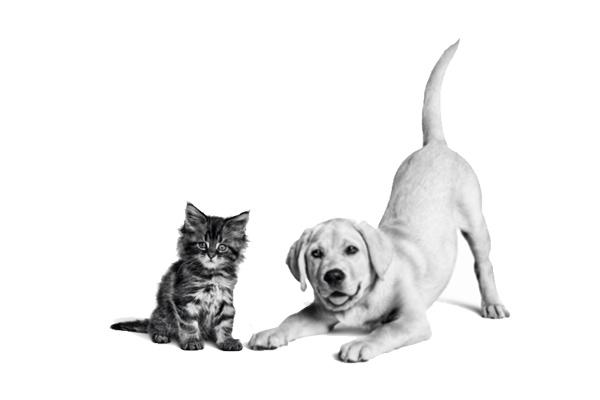 Ayuda a tu cachorro a crecer sano y fuerte