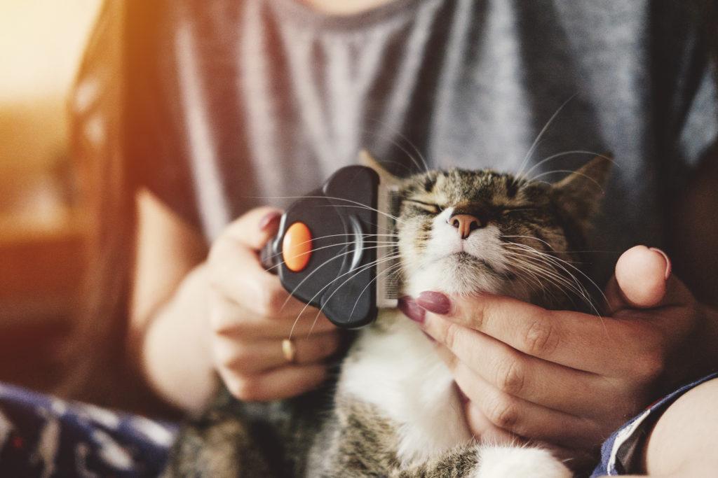 El proceso de muda en los gatos