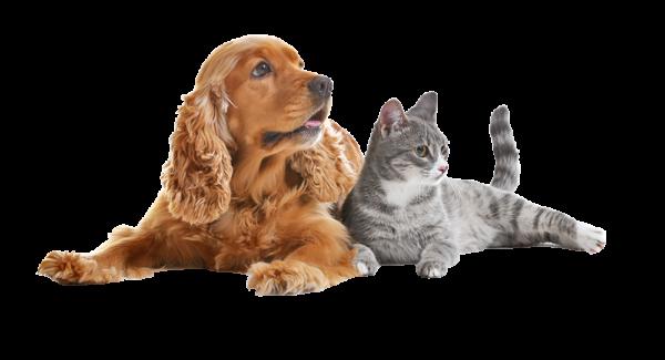 tiendas-mascotas-terranovacnc