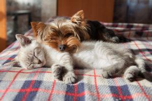 Abrir una tienda de animales y mascotas