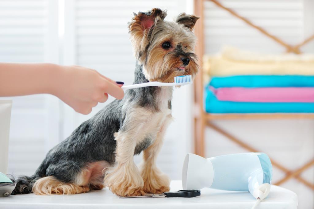Consejos para una buena higiene dental de tu perro